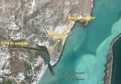 Pretenden construir campo de cultivo de camarón en Mulegé; de aprobarse, duraría 30 años