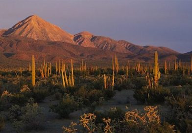 UABCS da conocer los efectos que tendrá en Baja California Sur, el cambio climático