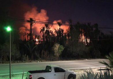 De nuevo, incendio consume palmares de San Ignacio; activan protocolos de emergencia