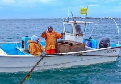 Inició la veda para la captura de langosta al norte de Baja California Sur: Conapesca